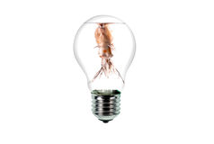 Poisson rouge dans l'ampoule Image libre de droits