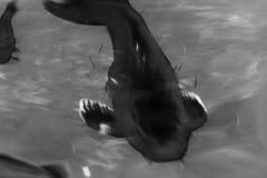 Poisson rouge de natation noir et blanc Photo libre de droits