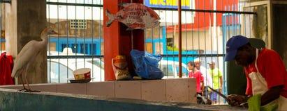 Poissonnerie dans Victoria, Seychelles Image libre de droits