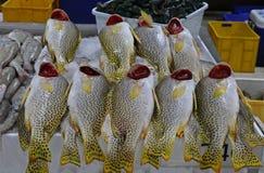 Poissonnerie de Dubaï avec les poissons locaux image libre de droits