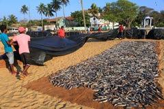 Poissonnerie de Negombo photographie stock