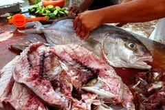 Poissonnier préparant le filet de poissons de séricole Images libres de droits