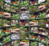 Poissons Photos stock