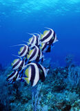 poissons Photographie stock