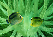 poissons Photo libre de droits