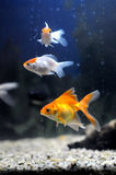 Poissons Images stock