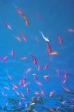 poissons Photographie stock libre de droits