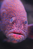 poissons Photos libres de droits