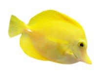 poissons Photo stock