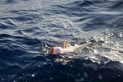 poissons accrochés Images libres de droits