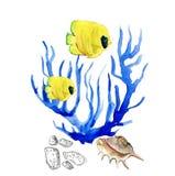 Poissons, algue Coral Algae et coquille tropicaux Illustration de Vecteur