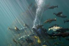poissons alimentants photo stock