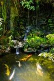 Poissons au lac, Thaïlande Images stock