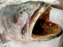 poissons avec la grande bouche Images libres de droits
