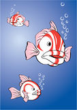 poissons Blanc-rouges Photos stock