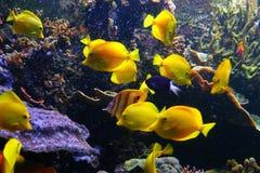poissons colorés Image libre de droits