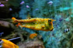 Poissons colorés et coralls tropicaux sous-marins Photographie stock libre de droits