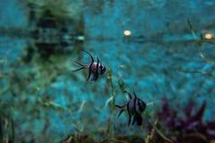 Poissons colorés et coralls tropicaux sous-marins Images stock