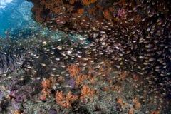 Poissons colorés sur le récif Images stock