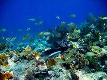 Poissons colorés en récif coralien Photo stock