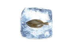 Poissons congelés, glace Image stock