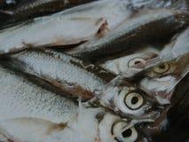 poissons congelés morts Photo stock