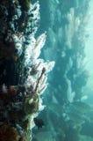 Poissons, coraux et éponges sur les pylônes de jetée dans l'aquarium d'océan photo stock