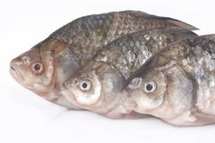 Poissons crus Images stock