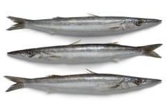 Poissons crus frais de barracuda Photos stock