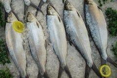 Poissons crus sur la glace avec les citrons Maquereau de mer dans la pile pour la vente et le cuisinier Photographie stock libre de droits