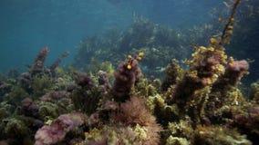 Poissons curieux de cordelette sous-marins banque de vidéos