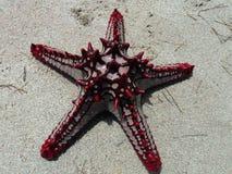 Poissons d'étoile photographie stock libre de droits