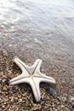 Poissons d'étoile Photographie stock