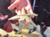 Poissons d'étoile en main Photographie stock libre de droits