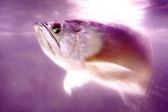 Poissons d'action Image stock
