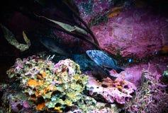 Poissons d'aquarium Image stock