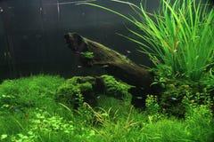 Poissons d'aquarium dans un beau paysage vert Images libres de droits