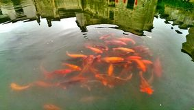 Poissons d'or de village de Hongcun Photographie stock libre de droits