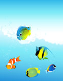 Poissons d'eau de mer Images libres de droits