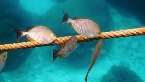 Poissons d'eau de mer Photographie stock