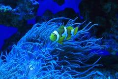 Poissons d'eau de mer exotiques Photos stock