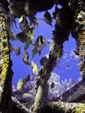 Poissons dans l'épave Photo stock