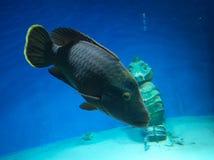 Poissons dans l'aquarium images libres de droits