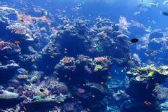 Poissons dans l'aquarium Image stock