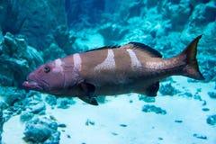 Poissons dans l'aquarium Photographie stock libre de droits