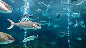 Poissons dans l'aquarium Image libre de droits