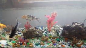 Poissons dans l'aquarium banque de vidéos