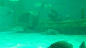 Poissons dans l'aquarium chez Bangsaen, Chonburi, Thaïlande clips vidéos