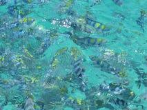 Poissons dans l'océan Photographie stock