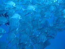 Poissons dans l'océan Image libre de droits